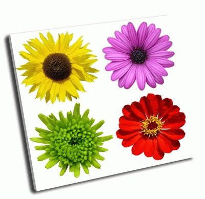 Картина коллаж с красочными цветами