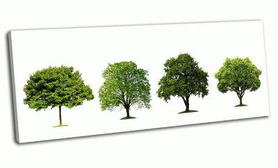 Картина коллекция деревьев