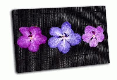 Картина композиция из разноцветных орхидей