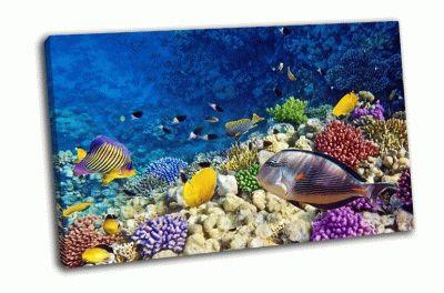 Картина коралловые рифы и рыбы в красном море, африка