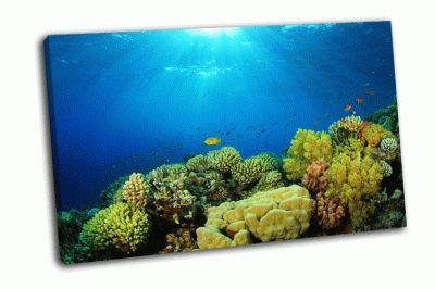 Картина коралловые рифы в солнечном свете