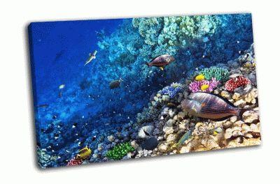 Картина кораллы рыбы в красном море