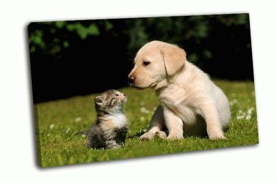 Картина кошка и собака