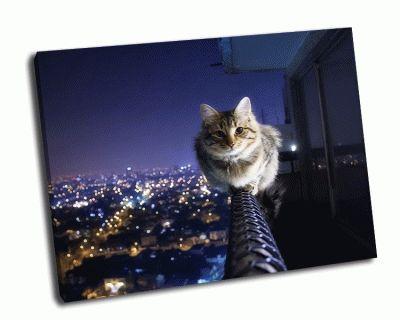 Картина кошка на балконе