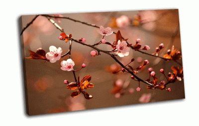 Картина красивое цветение японской вишни