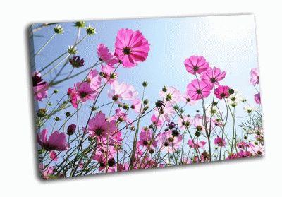 Картина красивые розовые цветы и голубое небо