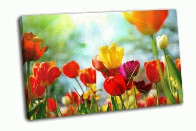 Картина красивые весенние цветы