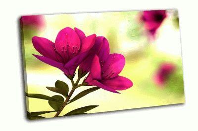 Картина красивый цветок цветом внешней