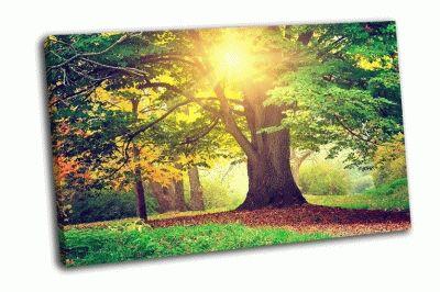 Картина красивый парк
