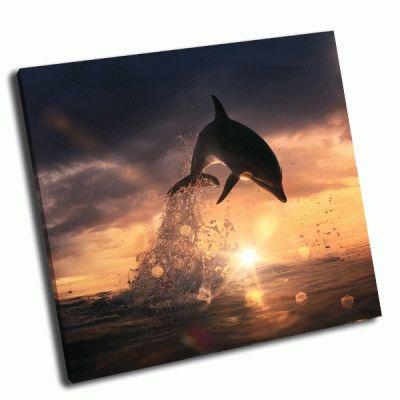 Картина красивый закат и дельфин