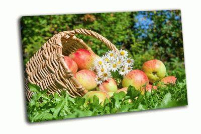 Картина красные сочные спелые яблоки