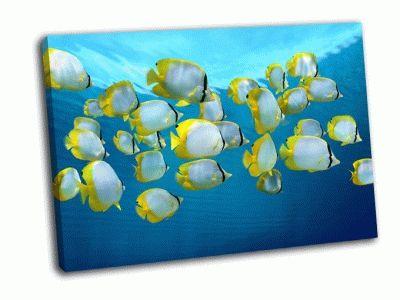 Картина красочные тропические рыбы