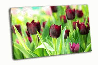 Картина красочные тюльпаны