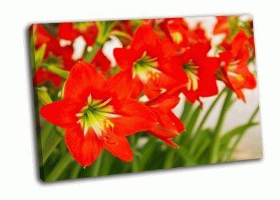 Картина крупным планом красный цветок амариллис