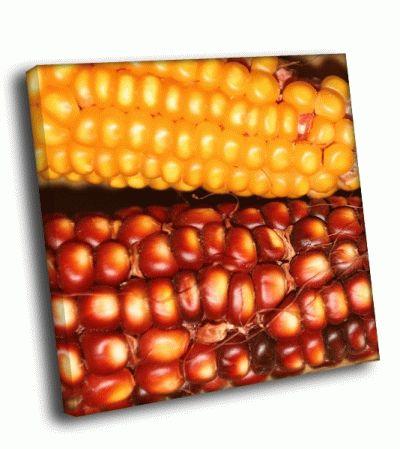 Картина кукуруза и гранат