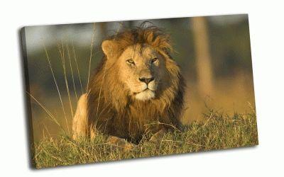 Картина лев, царь зверей