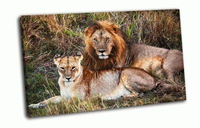 Картина лев и львица в саванах