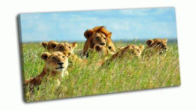 Картина лев в национальном парке серенгети