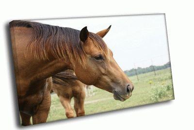 Картина лошадь на поле