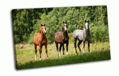 Картина лошади стоящие на пастбище