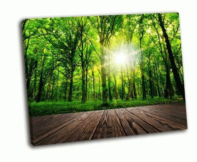 Картина лучи солнца в сквозь густого леса