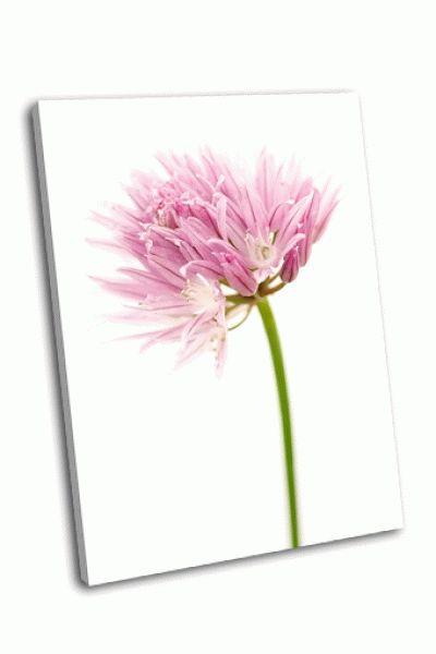 Картина луковичка цветка