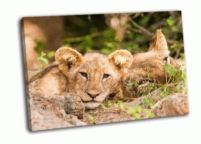 Картина львенок с мамой