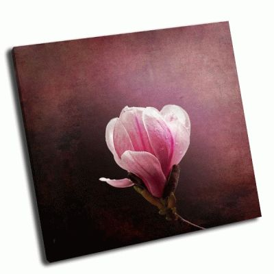 Картина магнолия цветет