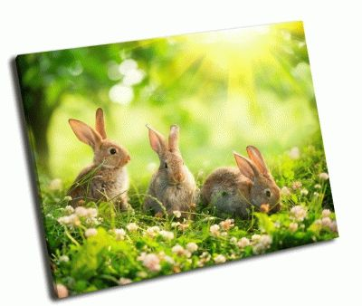 Картина маленькие кролики на лугу