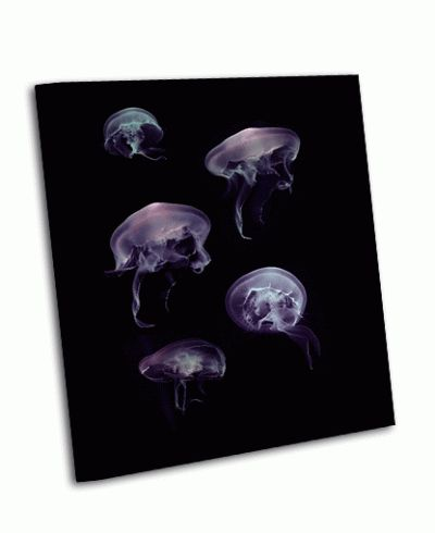 Картина медузы на черном фоне