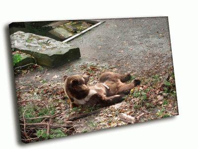 Картина медведь на привале