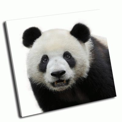 Картина медведь-панда