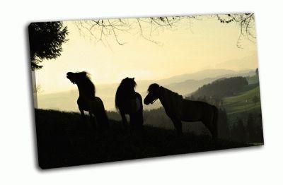 Картина мини шотландские пони