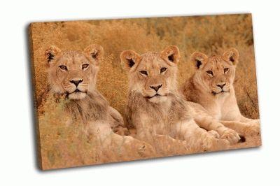 Картина молодые львы