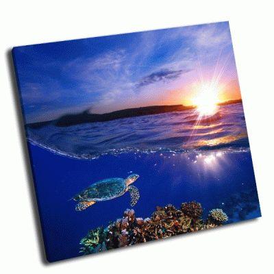 Картина морская черепаха на закате