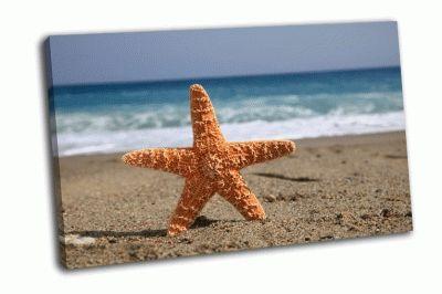 Картина морская звезда на пляже