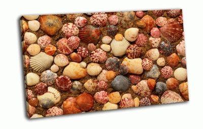 Картина морские ракушки