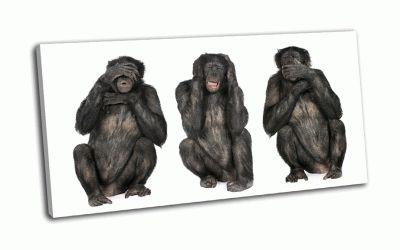 Картина мудрые обезьяны шимпанзе