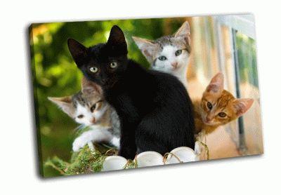 Картина oчаровательное семейство котят
