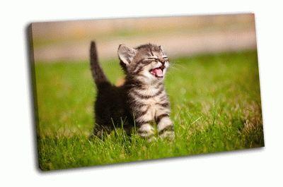 Картина очаровательный котенок табби