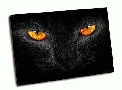 Картина оранжевые глаза черной кошки.