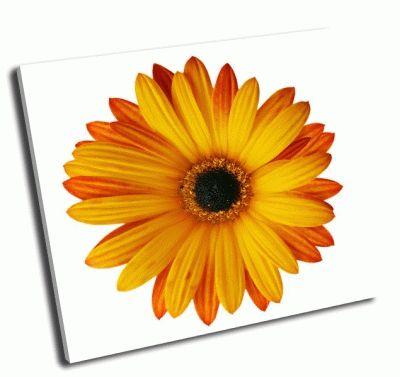Картина оранжевый цветок