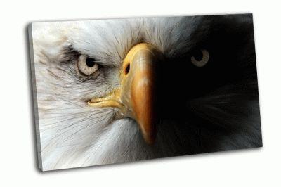 Картина орел крупным планом