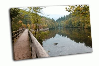 Картина отражение деревьев в озеро