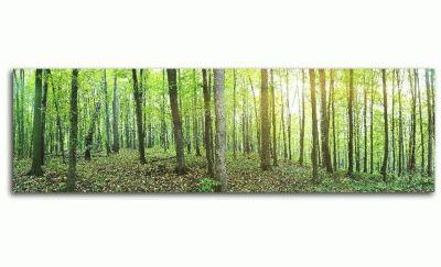 Картина панорама зеленого летнего леса