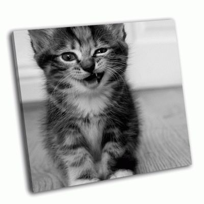 Картина подмигивающий котенок