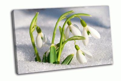 Картина подснежники со снегом в лесу