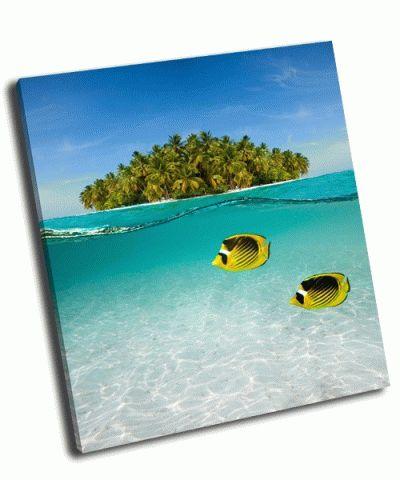 Картина подводная съемка рыба-бабочка