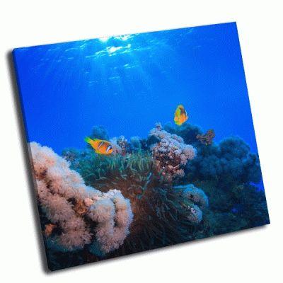 Картина подводный коралловый сад