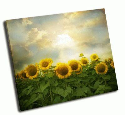 Картина поле с цветами подсолнухов